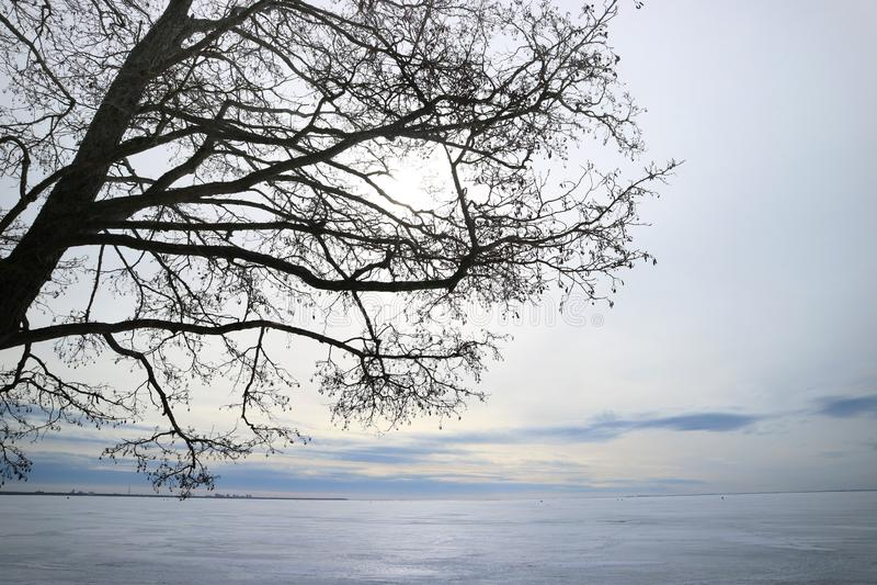芬兰湾在雪和树结冰的早期的弹簧作为背景 免版税库存图片