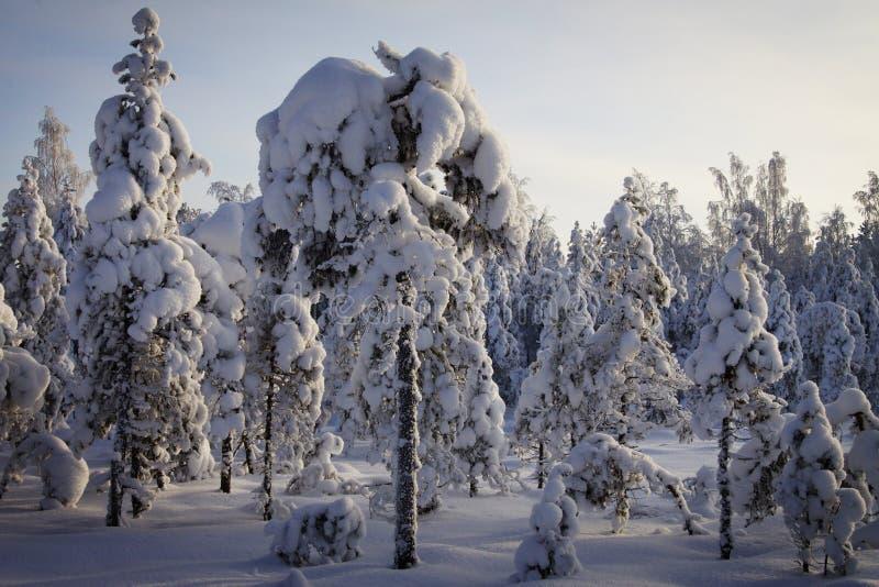 芬兰:冬天在森林里 免版税库存照片