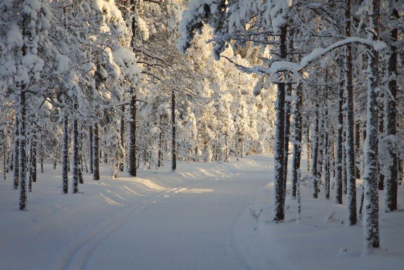 芬兰:冬天在森林里 库存图片