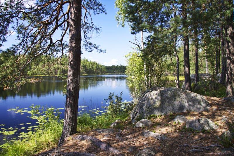芬兰:由湖的夏日 免版税库存图片