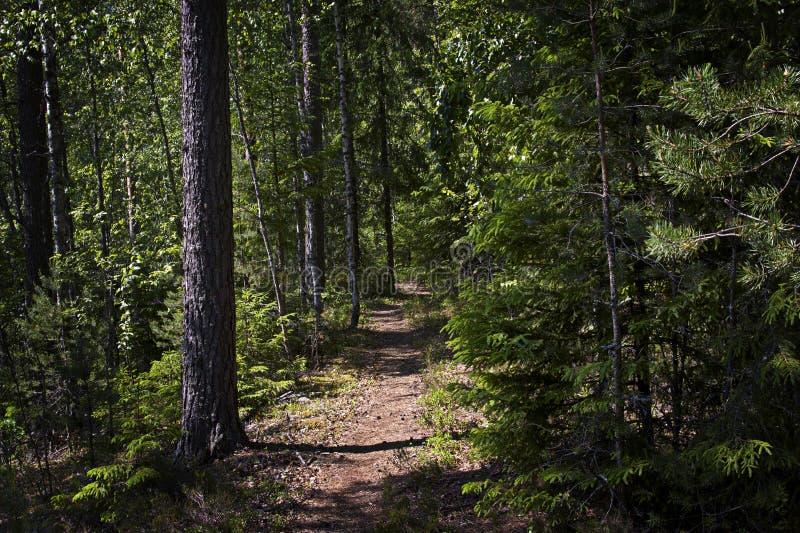 芬兰:道路穿过森林 库存图片