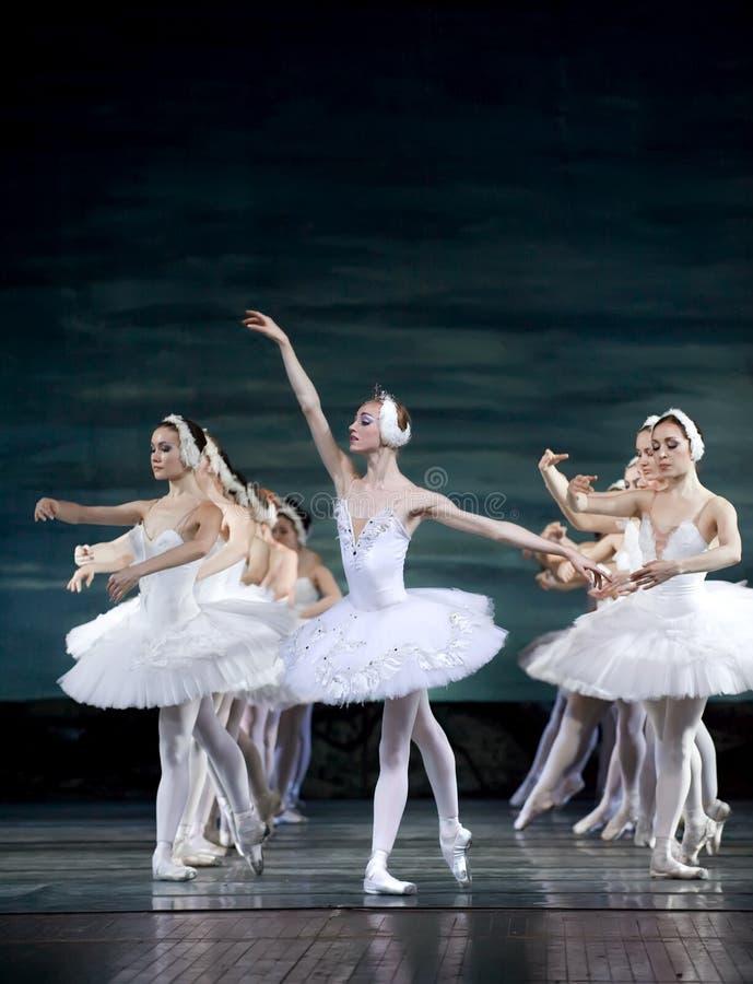 芭蕾湖天鹅 免版税库存图片