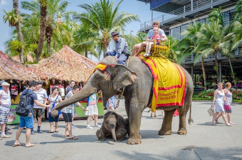 芭达亚,泰国:乘坐大象的游人 图库摄影