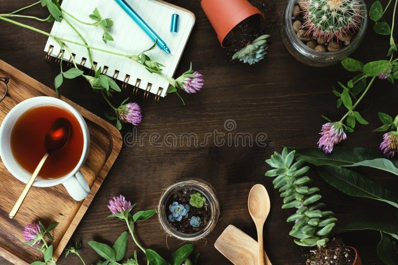 花、多汁植物和茶Flatlay与笔记本在木桌上,繁殖,从事园艺和改种 库存照片