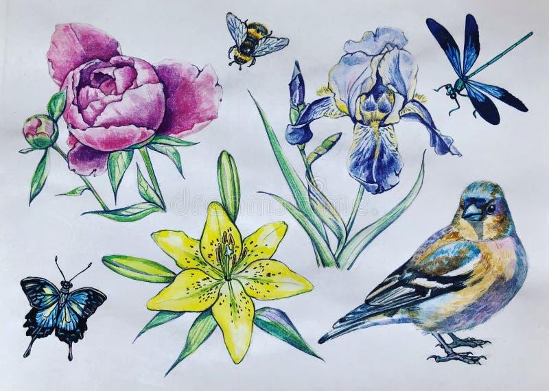 花、鸟和昆虫 库存例证
