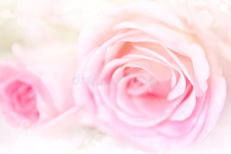 花与软的桃红色颜色的玫瑰背景 免版税库存照片