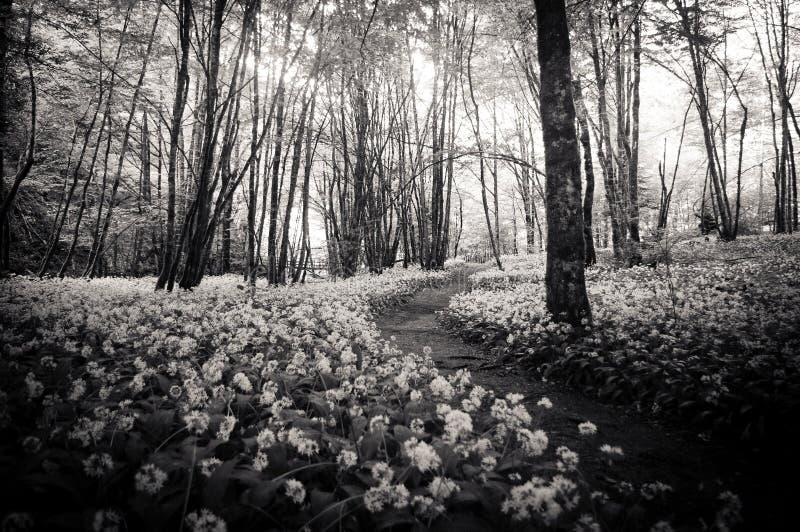 花之间的森林道路 免版税库存图片
