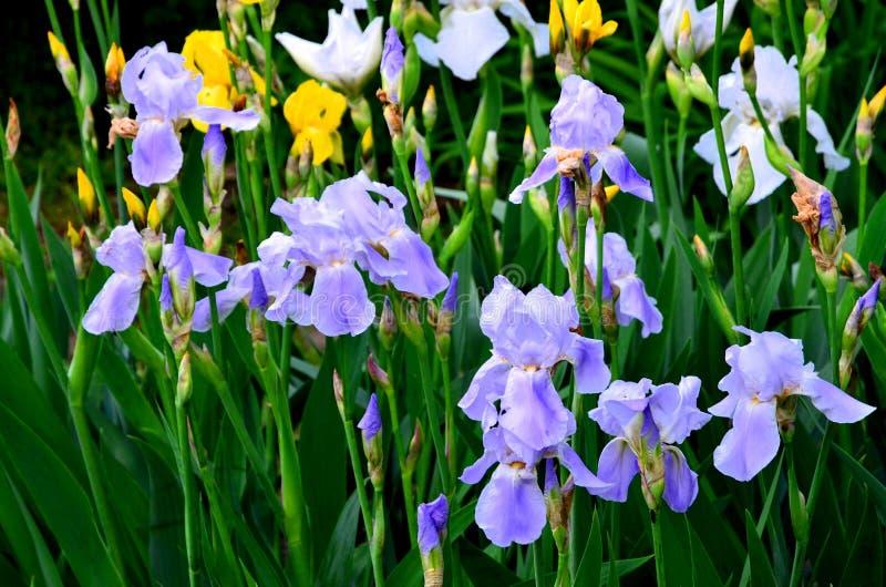 花使几种颜色现虹彩 库存图片