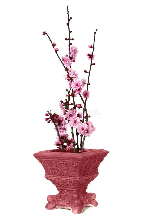 花俏丽的花瓶 库存图片