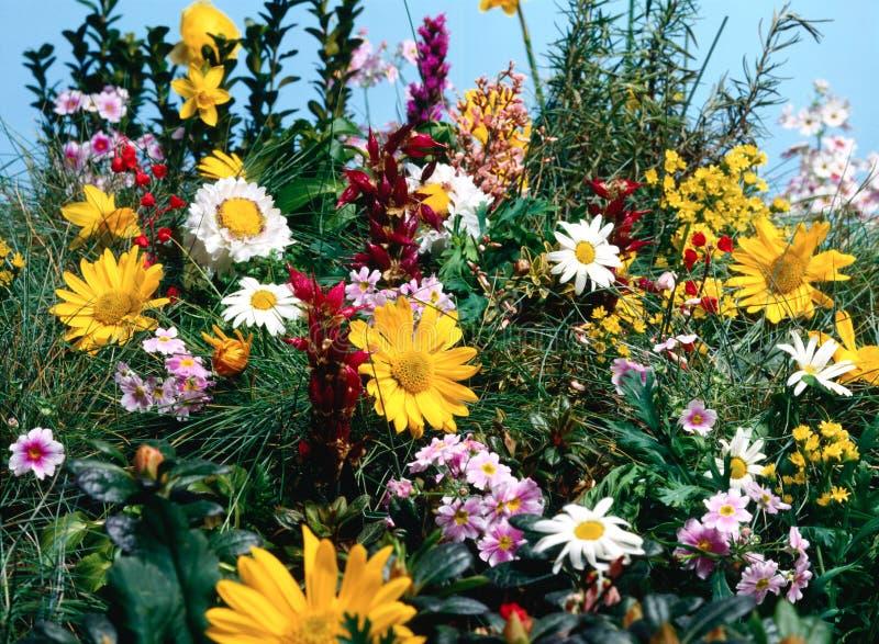 花充分的草甸 免版税图库摄影