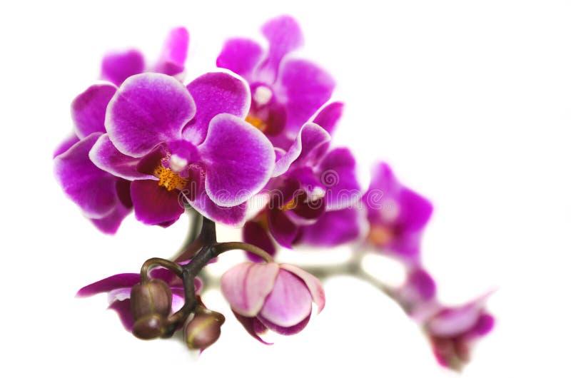 花兰花植物兰花。 免版税库存照片