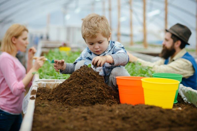 花匠一点 一点花匠与土壤一起使用 一点花匠自温室 种植花的小花匠孩子 库存图片
