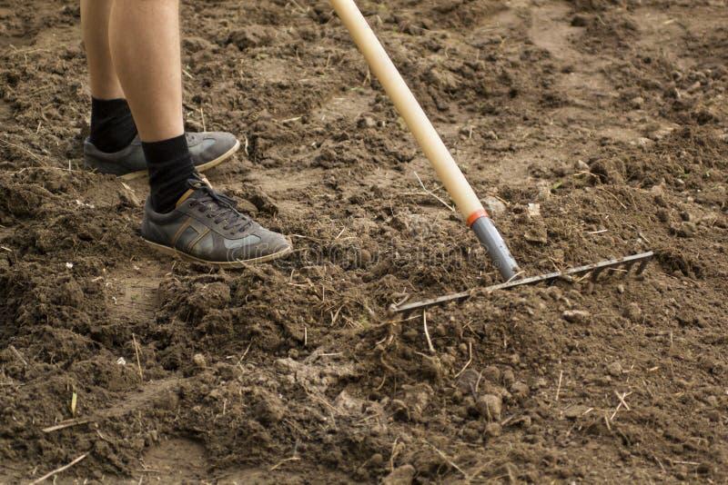 花匠与犁耙一起使用在庭院里 土壤为种植在春天做准备 从事园艺 免版税库存照片