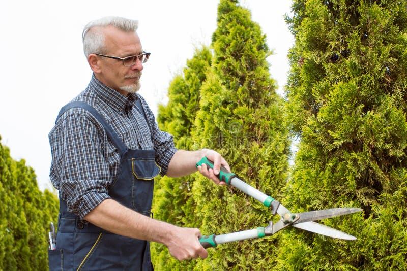 花匠削减树剪 图库摄影