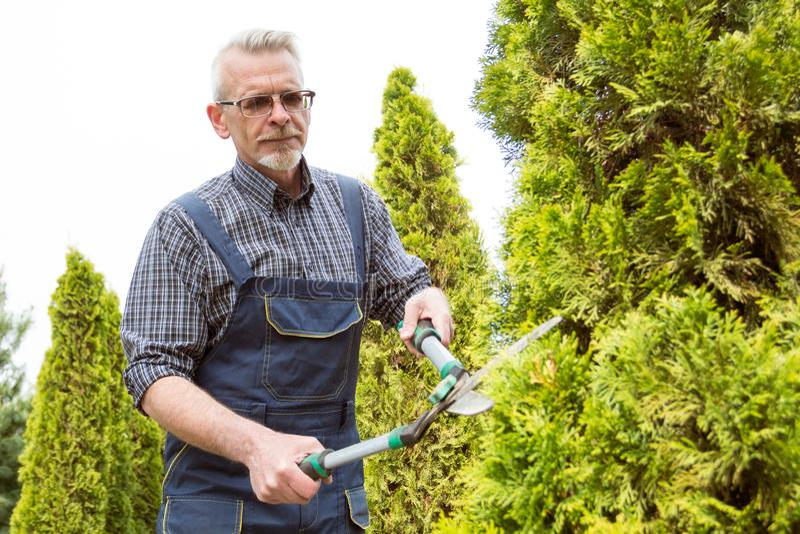 花匠削减树剪 免版税图库摄影