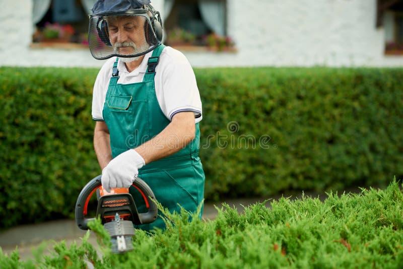 花匠剪报树篱在使用汽油树篱切削刀的庭院里 图库摄影