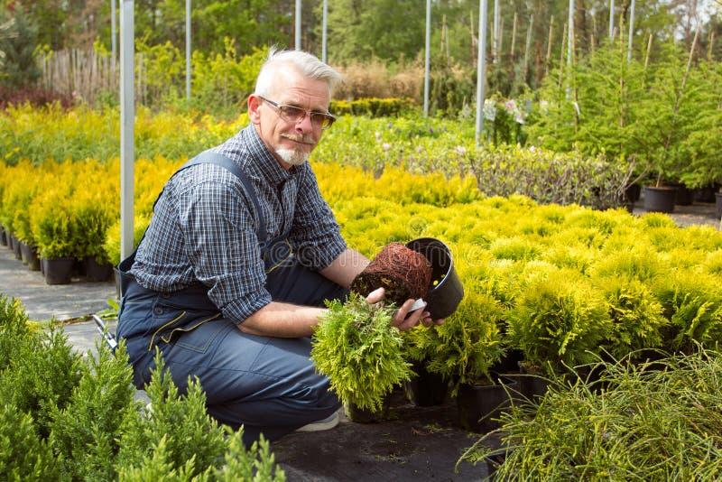 花匠在庭院市场上的拿着一棵小幼木植物 免版税库存图片