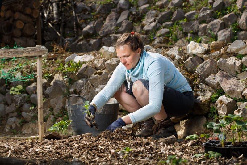 花匠在新近地被耕的庭院床上的种植幼木 免版税库存照片