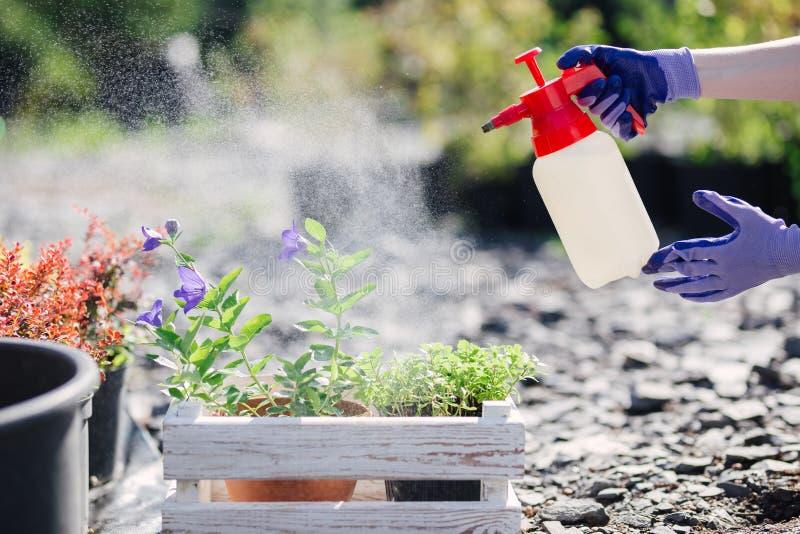 花匠妇女洒从庭院喷雾器的花,关闭照片 免版税库存照片