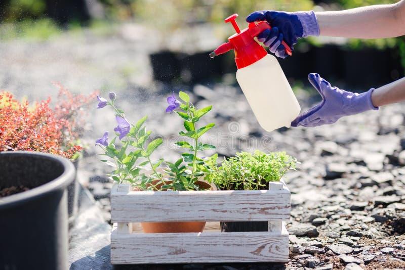 花匠妇女洒从庭院喷雾器的花,关闭照片 图库摄影