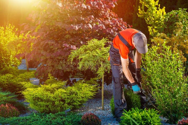 花匠庭院工作 库存照片
