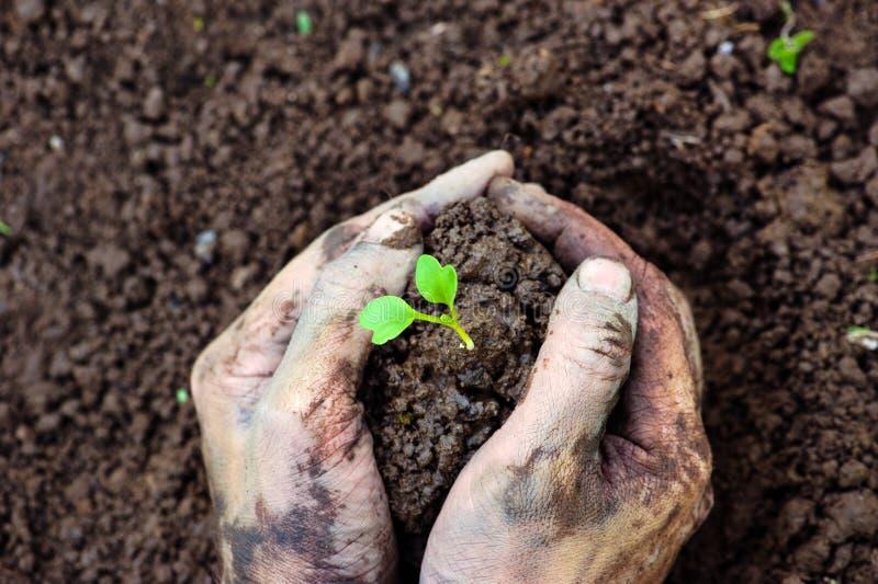 花匠手土壤为在地面的幼木做准备 免版税库存图片