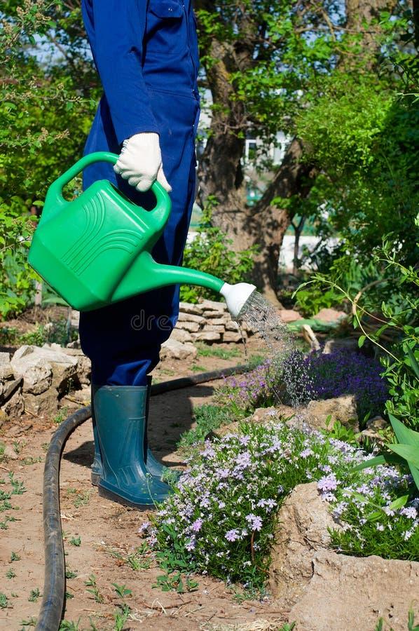 花匠浇灌的花 免版税图库摄影