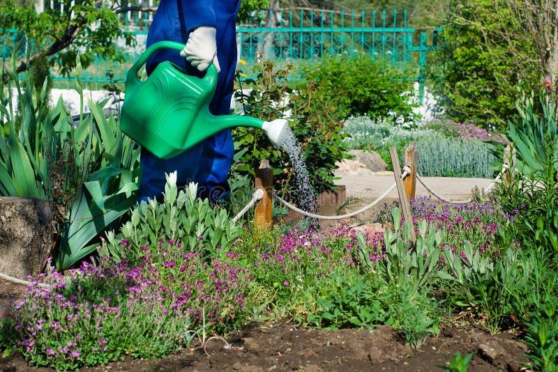花匠浇灌的花 免版税库存照片