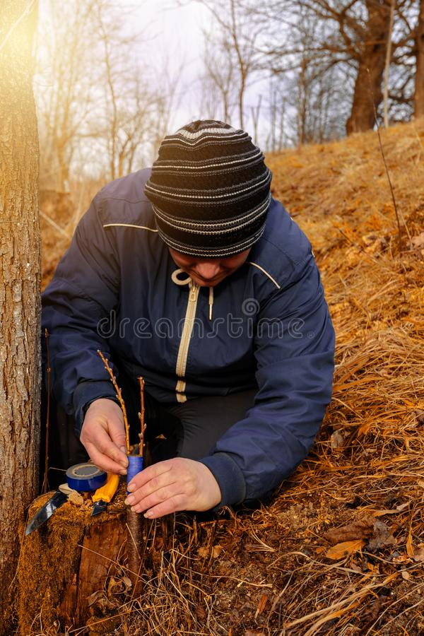 花匠的妇女堵塞被嫁接的树的切除零件防止烂掉在特写镜头的这个地方 免版税图库摄影