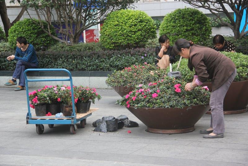 花匠的被安排的花盆在深圳罗湖 库存图片