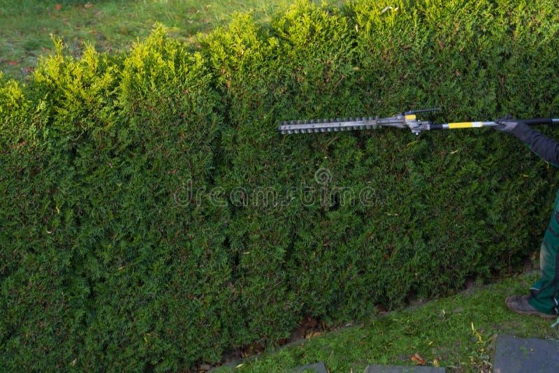 花匠裁减树篱 图库摄影