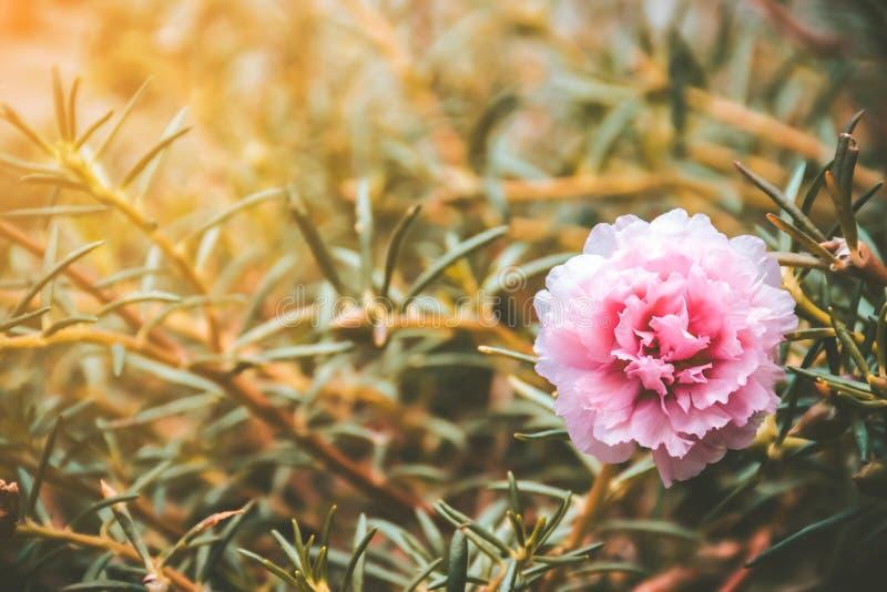 花卉与葡萄酒口气在庭院里 库存照片