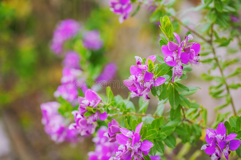 花卉与绿色的背景分支紫色花 免版税库存照片
