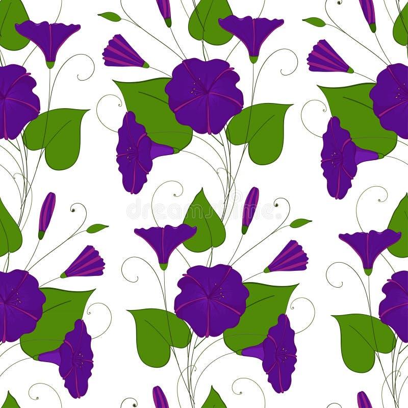 花卉典雅的背景蓝色旋花植物 无缝的嫩样式花野生植物 牵牛花不尽女性 库存例证