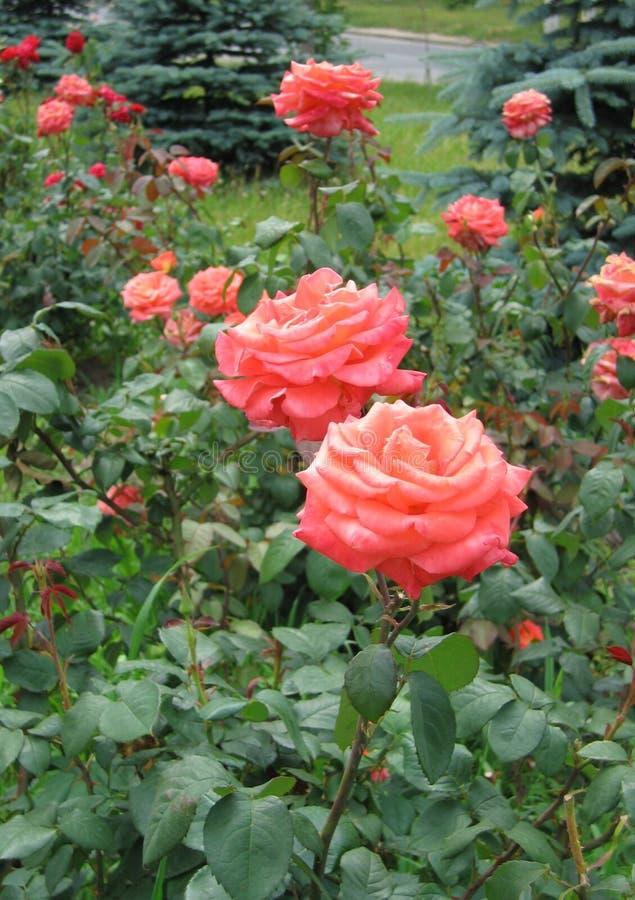 花卉夏天风景背景 库存图片