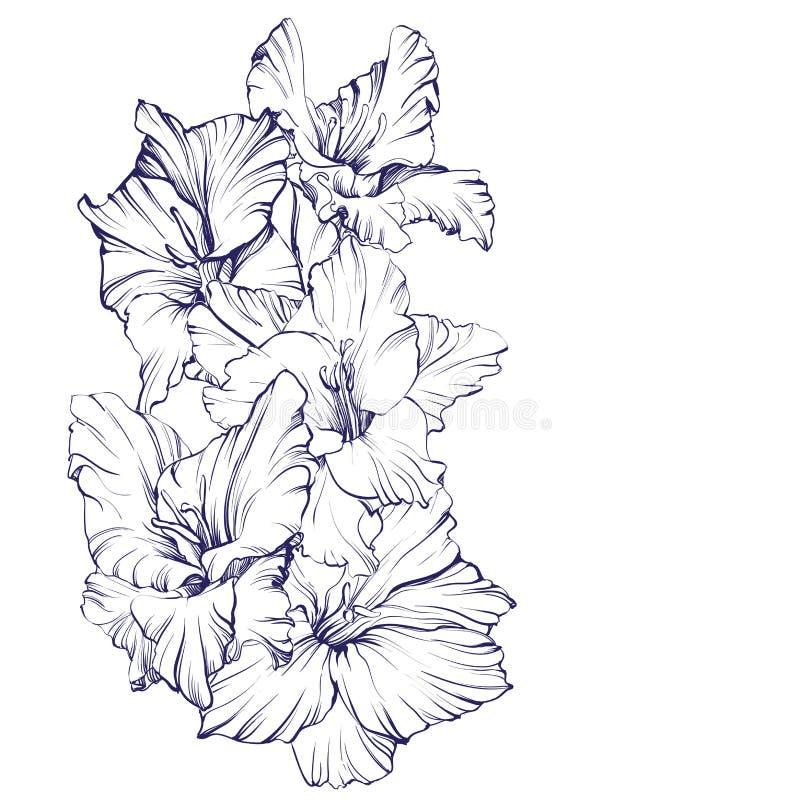 Download 花卉开花的剑兰手拉的传染媒介例证 向量例证. 插画 包括有 开花, beautifuler, 书法, 图象 - 72355402