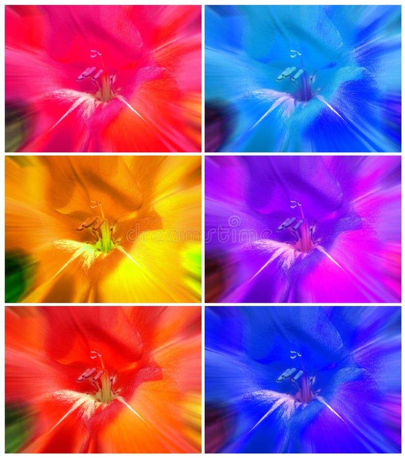 花卉抽象五颜六色的背景拼贴画 免版税图库摄影