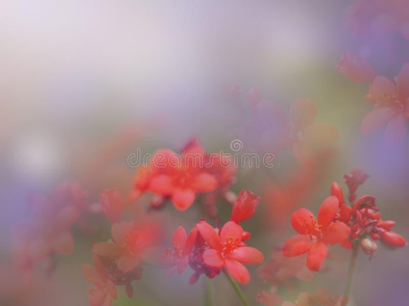 花卉抽象背景 免版税图库摄影