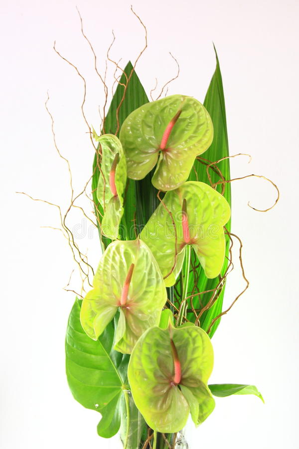 花卉排列 免版税图库摄影