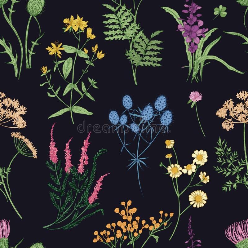 花卉无缝的样式用五颜六色的森林草本、草本植物和开花的野花在黑背景 库存例证