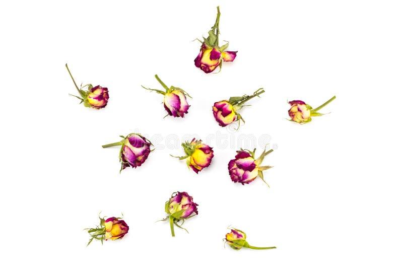 花卉样式由红色和黄色玫瑰,绿色叶子, branc做成 免版税库存图片