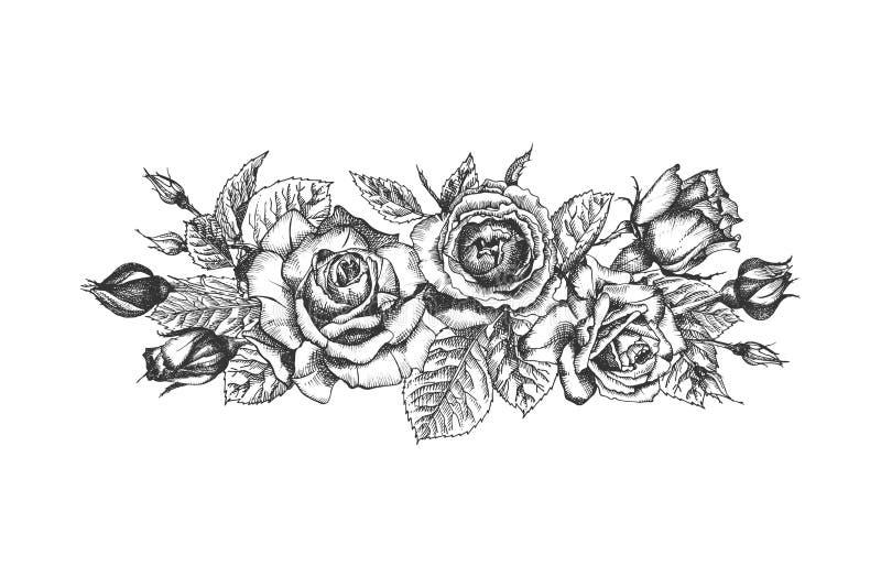 花卉框架构成系列 玫瑰、叶子和分支手拉的剪影详述了葡萄酒植物的illuatration 向量例证