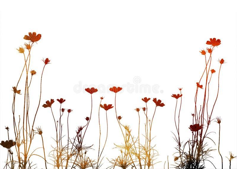 花卉框架样式 皇族释放例证