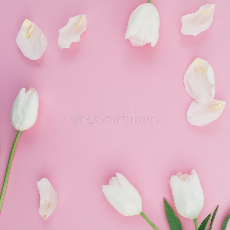 花卉框架由白色郁金香做成在桃红色淡色背景开花 平的位置,顶视图 库存图片