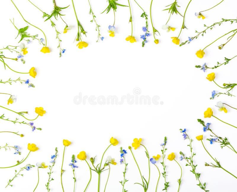 花卉框架由黄色被隔绝的毛茛花和蝴蝶花做成在白色背景 顶视图 平的位置 免版税库存照片