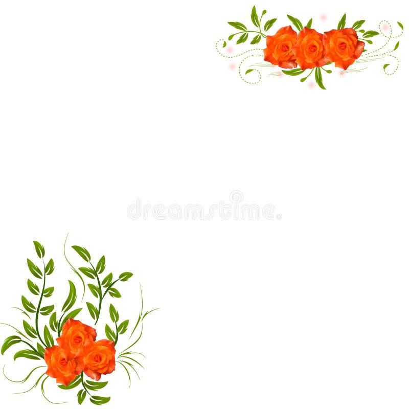 花卉橙色玫瑰 库存图片