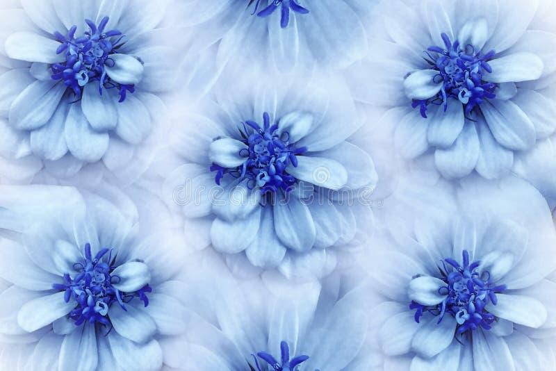 花卉水彩白蓝色背景 开花在浅兰的背景的雏菊特写镜头 开花构成 皇族释放例证