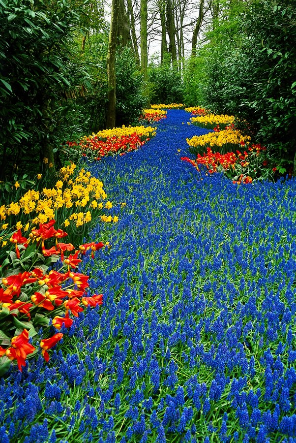 花卉河 图库摄影