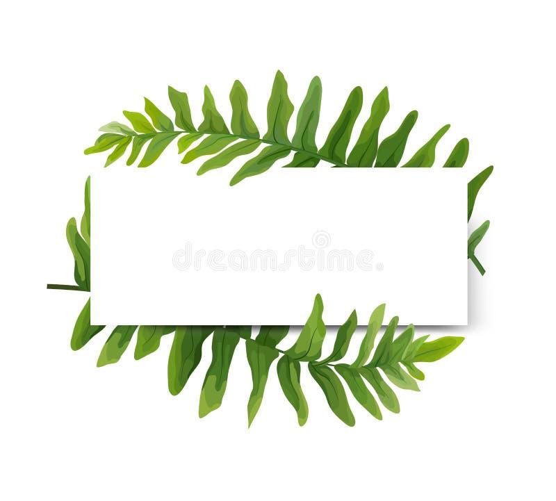 花卉现代传染媒介卡片设计:绿色Polypodiophyta蕨fron 皇族释放例证