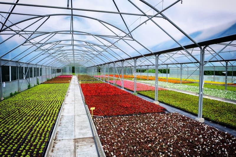 花卉生长的温室 免版税库存图片